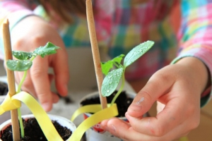 garden-therapy