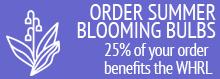 Order Summer Blooming Bulbs