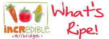 What's Ripe in the Incredible Edible Milbridge Gardens
